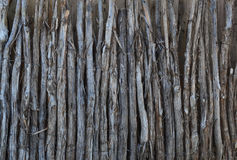 Загородка лимбов кедра Стоковые Фото