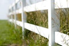 Загородка и высокорослая трава Стоковые Изображения RF