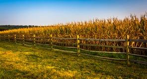 Загородка и кукурузное поле на ферме в сельском York County, Pennsylvani стоковые изображения
