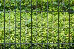 Загородка и куст в предпосылке Стоковые Фотографии RF