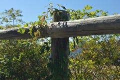 Загородка и лозы Стоковое Изображение RF