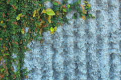 Загородка и трава в chiangmai Стоковое Изображение RF