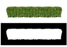 Загородка кустов Стоковые Изображения RF