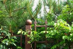 Загородка металла Стоковая Фотография