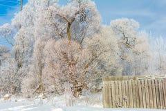 Загородка рядом с деревом в зиме, солнечным зимним днем Стоковые Изображения