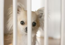 Загородка собаки внутри помещения Стоковое Изображение RF