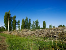 Загородка сделанная ветвей дерева Стоковое Изображение