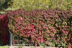 Загородка с листьями Стоковые Изображения RF