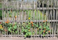 загородка цветет деревянное Стоковая Фотография RF
