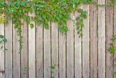 загородка деревянная Стоковое Фото
