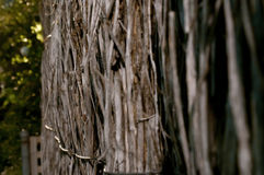Загородка Bushyard Стоковая Фотография