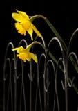 Загородка Daff- Стоковое фото RF