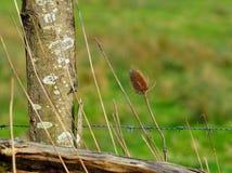 Загородка Thistle и колючей проволоки Стоковые Фотографии RF