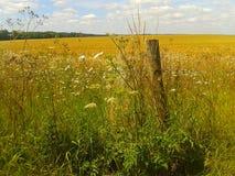 Загородка Wildflower Стоковые Изображения RF
