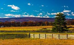 Загородки и сосна в поле в Gettysburg, Пенсильвании Стоковое Фото