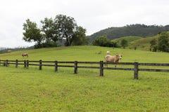 Загородки скотин в поле травы в горе Стоковое Изображение