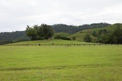 Загородки скотин в поле травы в горе Стоковая Фотография