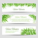 Заголовки вектора с зелеными листьями Стоковая Фотография