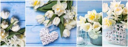 Заголовок места весны Коллаж от фото с цветками весны Стоковые Изображения