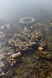 Загрязнение воды Стоковое фото RF