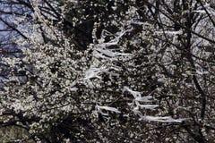 загрязнение Отход пластмассы на зацветая дереве сада весной Загрязнение, глобальное потепление и изменения климата окружающей сре Стоковые Фотографии RF