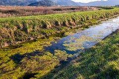 Загрязнение природы и воды Водоросли и морская водоросль в воде Стоковая Фотография RF