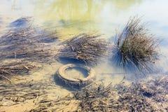 загрязнение Проблема окружающей среды, концепция бедствия экологичности Стоковые Изображения