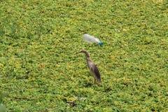 Загрязнение & система природы животных человеческая разбивая Стоковые Изображения