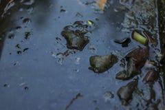 Загрязнятьый сток стоковые фотографии rf