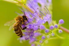 Загрязнять деталь пчелы Стоковое Изображение RF