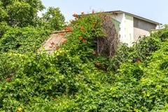 Загубленная стена здания Покинутый к ненужным домам разрушьте Самоуничтожение покинутых зданий Схематически, cri стоковая фотография