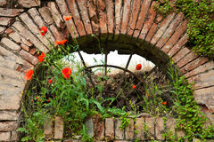 Загубленное окно Стоковые Изображения