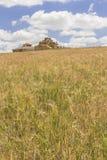 Загубленный дом голубя самана между полем хлопьев и пасмурным bl Стоковое Фото