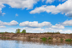 Заглотайте гнезда в песке на банке реки черепашки Стоковая Фотография RF