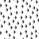 Заглотайте картину птицы безшовную на белой предпосылке Стоковое фото RF