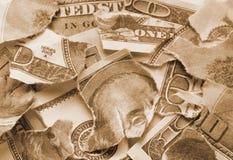задавленные деньги Стоковое Изображение RF