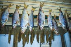 Задвижка рыбной ловли, сушить рыб стоковая фотография rf