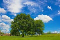 задворк красивейшая Стоковые Фото
