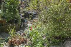 Задворк окруженная красивыми кустарниками стоковое изображение rf