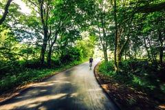 Задействовать через лес на дороге стоковое фото