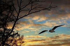 заднее гнездй Стоковая Фотография RF