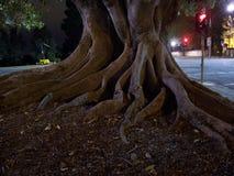 задние корни к вашему Стоковые Фото