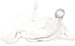 задние косточки Стоковая Фотография RF