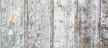 Задние круглые деревянные панели с серебряными долларами стоковое изображение rf