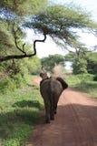 задние слоны Стоковое Фото