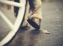 Задние hoofs с подковами обузданной лошади и белого колеса экипажа Стоковая Фотография