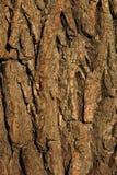 задний вал текстуры картины Стоковое Фото