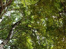 Задний взгляд дерева Стоковая Фотография RF