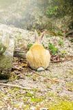 Задний взгляд кролика в земле Стоковая Фотография RF