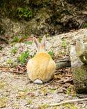 Задний взгляд кролика в земле Стоковое Фото